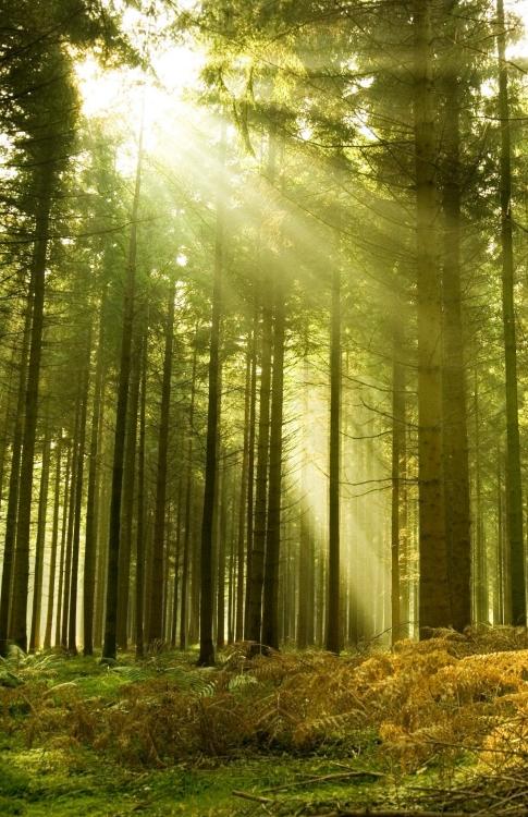 Metsakinnistu ja raieõiguse hinnapäring